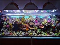 riffaquaristik meerwasseraquarium bei. Black Bedroom Furniture Sets. Home Design Ideas